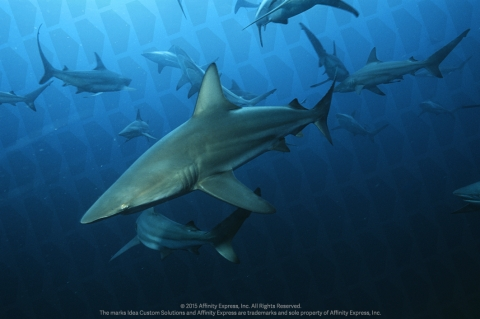 Sharks Swimming Raise the Question if SMBs Should Jump on Trending Topics